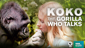 Koko: The Gorilla Who Talks (2016)